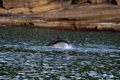 golfinho junto costa